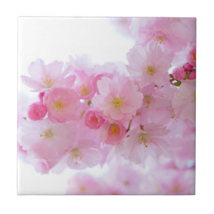 Japanischer Kirschbaum Blossom Fliese
