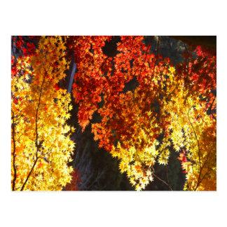Japanisches rotes und gelbes Blätter des Herbstes Postkarte
