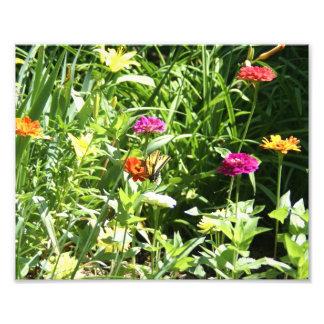 Jardin d'agrément avec un papillon photo