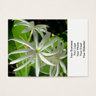 Jasmin-weiße grüne Blume Visitenkarte
