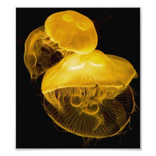 Jellfish Photodrucke