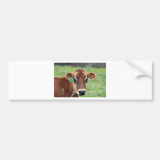 Jersey-Kuh Autoaufkleber