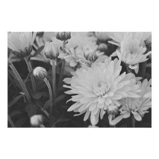 Jolies fleurs photographe