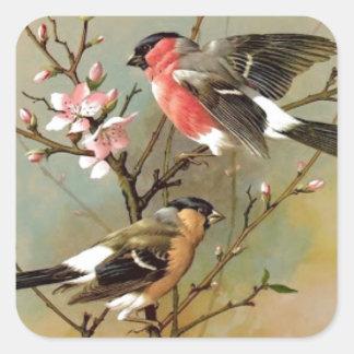 Jolis oiseaux vintages sticker carré