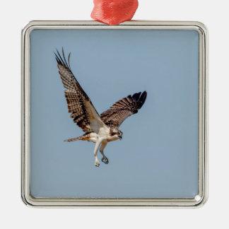 Jugendlicher Osprey im Flug Silbernes Ornament