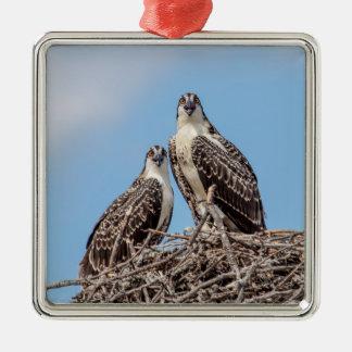 Jugendlicher Osprey im Nest Silbernes Ornament