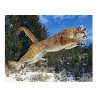 Jumping Cougar Postkarte