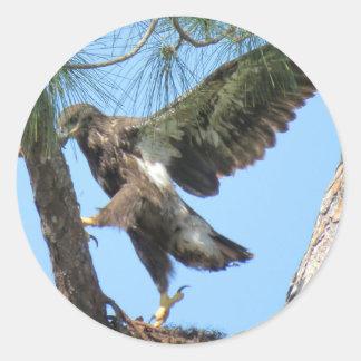 Junge Eagle-Yogaausdehnung Aufkleber