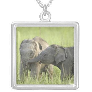 Junge eine des indischen/asiatischen Elefanten Versilberte Kette
