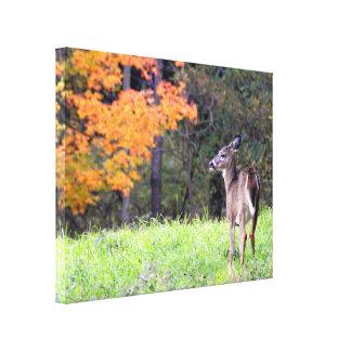 Junge Rotwild im Herbst Leinwanddruck