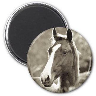 Junger Stallion Runder Magnet 5,7 Cm