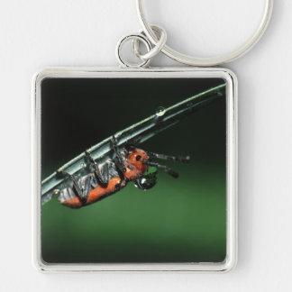 Käfer Schlüsselanhänger