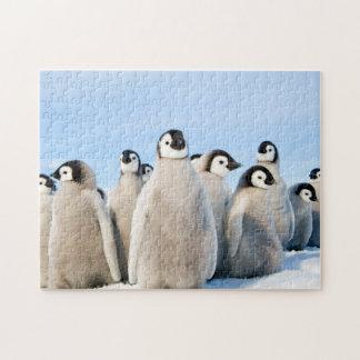 Kaiser-Pinguin-Küken - Puzzlespiel