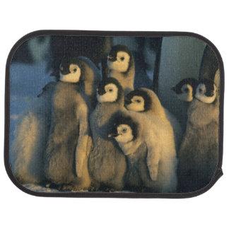 Kaiser-Pinguinküken in der Kinderkrippe, Automatte