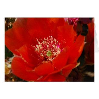 Kaktus-Blume 12 Karte