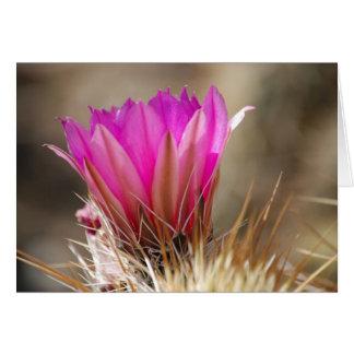 Kaktus-Blume 26 Karte