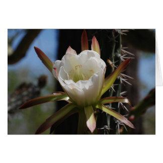 Kaktus-Blume 6 Karte