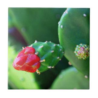 Kaktus-Blume Fliese