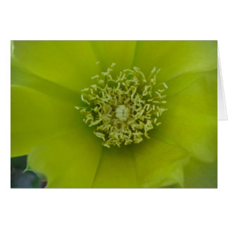 Kaktus-Blume Karte