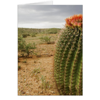 Kaktus-Blumen 007 Karte