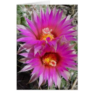 Kaktus-Blumen des Ball-F0005 (escobaria vivipara) Karte