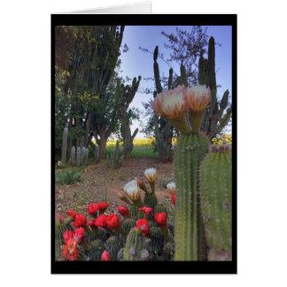 Kaktus-Blüte Grußkarte