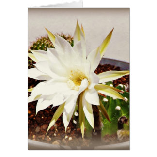 Kaktus-Blüte Karte