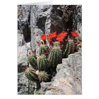 Kaktus im Felsen Karte