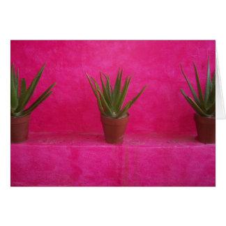 Kaktus Karte