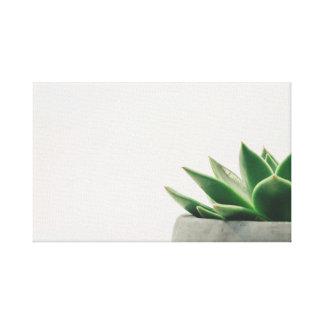 Kaktus Leinwanddruck