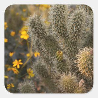 Kaktus und Wildblumen Quadratischer Aufkleber