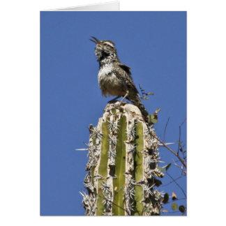 Kaktus-Zaunkönig Karte