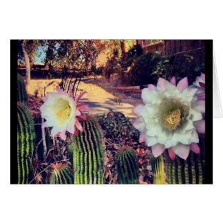 Kaktusblüte Grußkarte