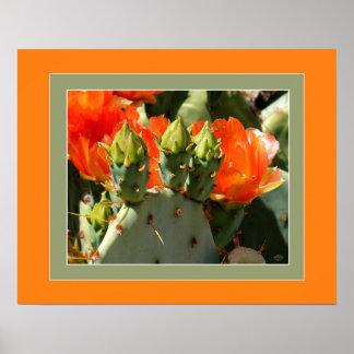 Kaktusfeige-Aprikosen-Blüten Poster
