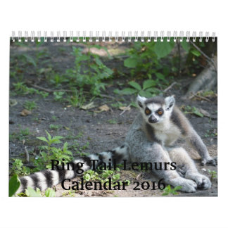 Kalender Ring-Schwanzlemurs-2016