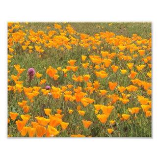 Kalifornien-Mohnblumen-Feld Fotodruck