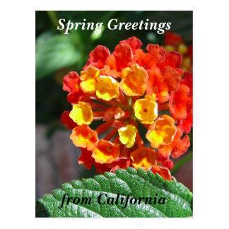 Kalifornien-Wildblumen Postkarte