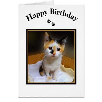 Kaliko-Kätzchen-alles Gute zum Geburtstag Grußkarte