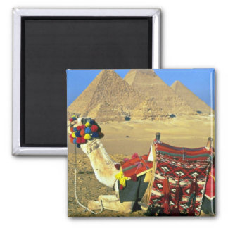 Kamel und Pyramiden, Kairo, Ägypten Quadratischer Magnet