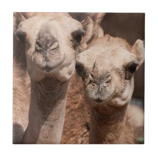 Kamele am Kamelmarkt in Al Ain nahe Dubai Keramikfliese
