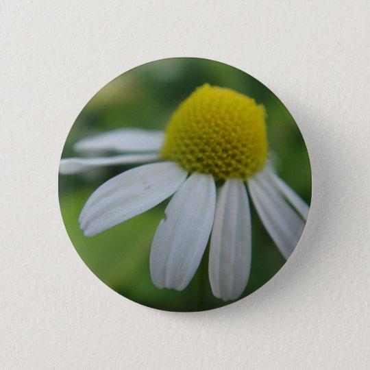 Kamillenblüte Runder Button 5,1 Cm