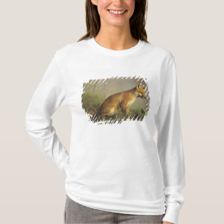 Kanada, Quebec. Junges des roten Fuchses am T-Shirt