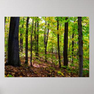 Kanadischer Wald im Sonnenlicht Poster