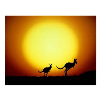 Kängurus im australischen Hinterland Postkarte