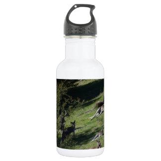 Kängurus Trinkflasche