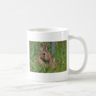 Kaninchen Tassen