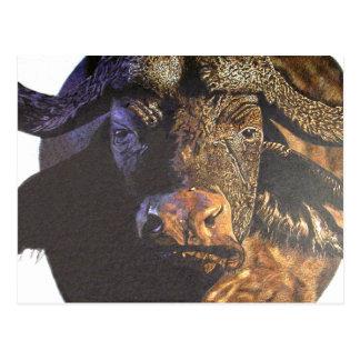 Kap-Büffel Postkarte