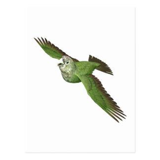 Kap-Papagei Postkarte
