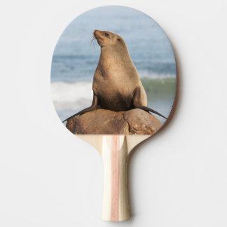 Kap-Pelz-Siegel, das auf einem Felsen stillsteht Tischtennis Schläger