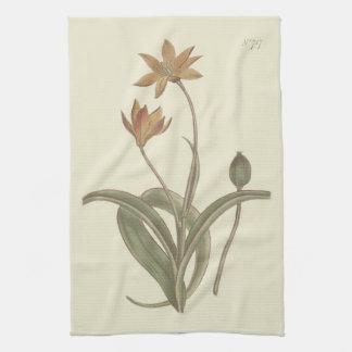 Kap-Tulpe-botanische Illustration Handtuch